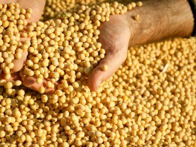 Governo de Goiás retoma tributação sobre soja e milho