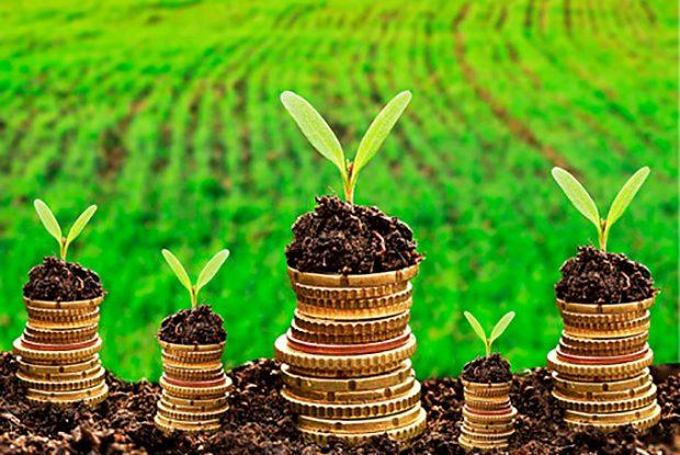 Parceria facilita acesso do produtor a crédito rural