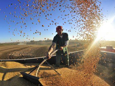 Louis Dreyfus suspenderá processamento de grãos em Goiás e Paraná por baixa oferta