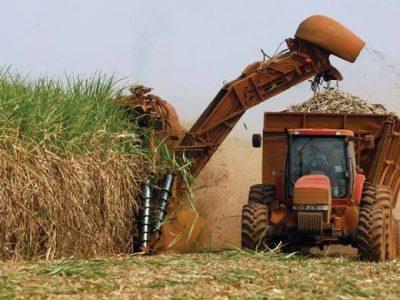 Empresa pode creditar gasto com produção e cultivo de cana, diz Carf