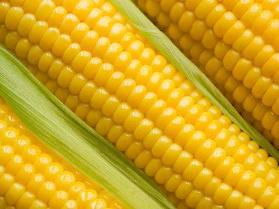 Sefaz mantém benefício do milho a partir de setembro