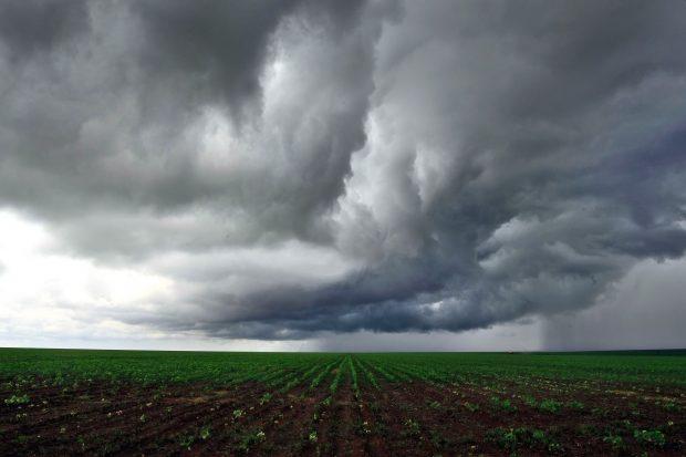 Chuvas regulares favorecem o plantio de grãos em Goiás