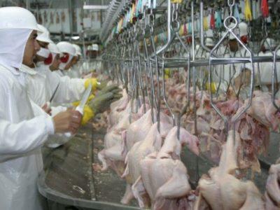 Produção de carne de frango deve cair em 2016, diz associação