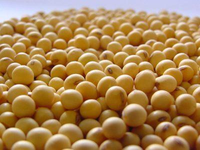 Indústria tem prazo para contribuir ao fundo da soja