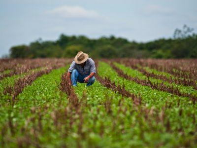 Conab anuncia recuo de 3,4% na safra de grãos