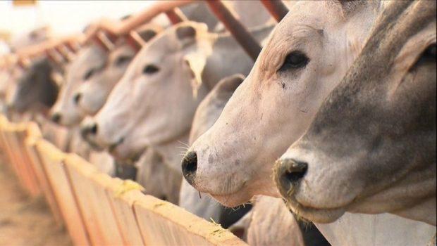 Abate de bovinos cresce 3,8% em meio a Operação Carne Fraca